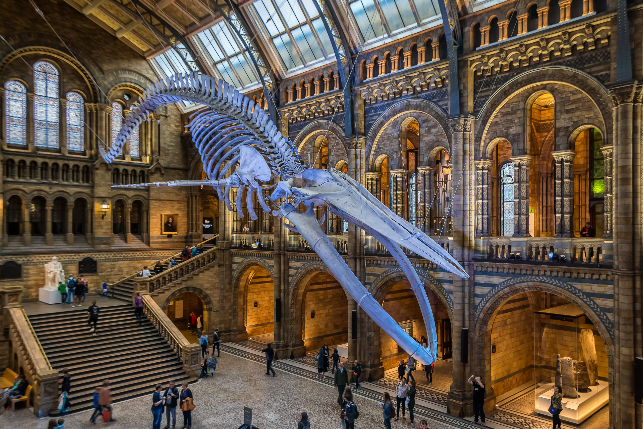 Blue Whale at the National History Museum