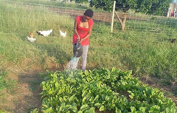 Member of the blind choir watering crops with chickens in the background